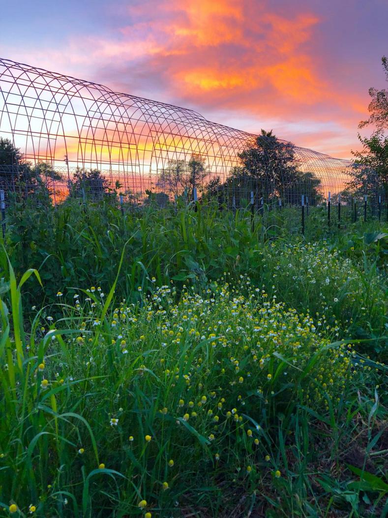 Raiquee's 2019 garden thread!-8dd40c6d-742c-4229-89ed-e6e60e46ed93_1563021059876.jpg