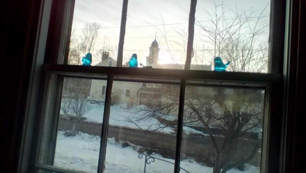 Starting from scratch-bluebirds.jpg