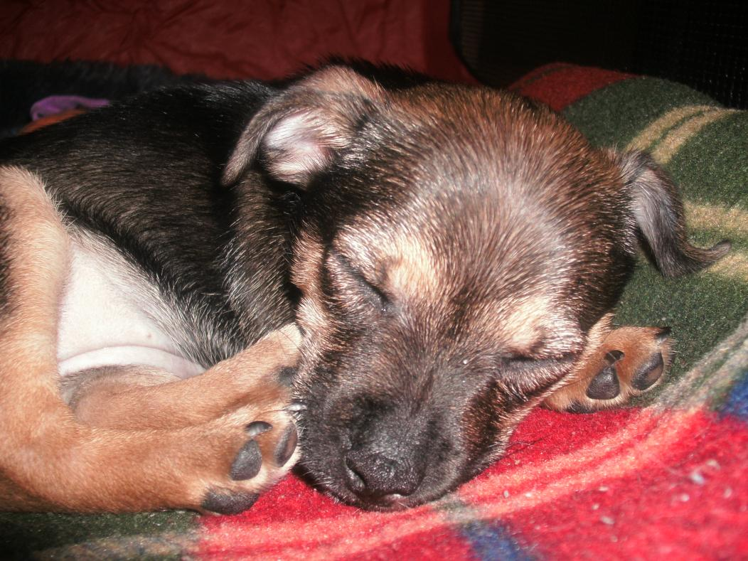 My newest family member-closeup-sleeping.jpg
