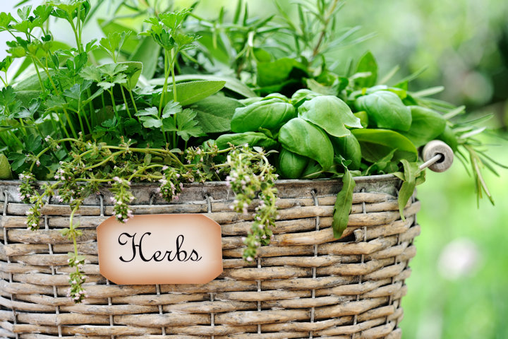 Best Herbs to Grow in Your Container Garden