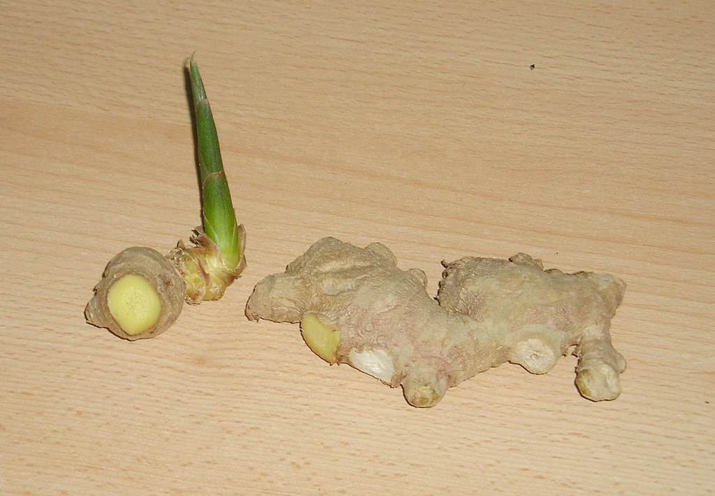 grow ginger root