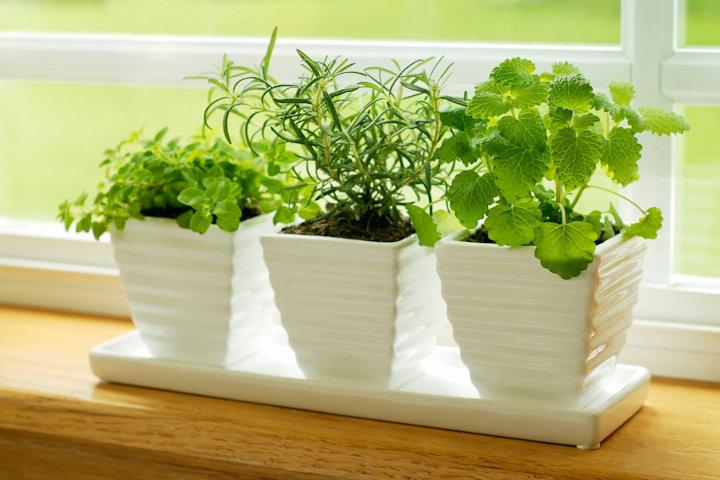 DIY Indoor Herb Garden Ideas - Frugal Village