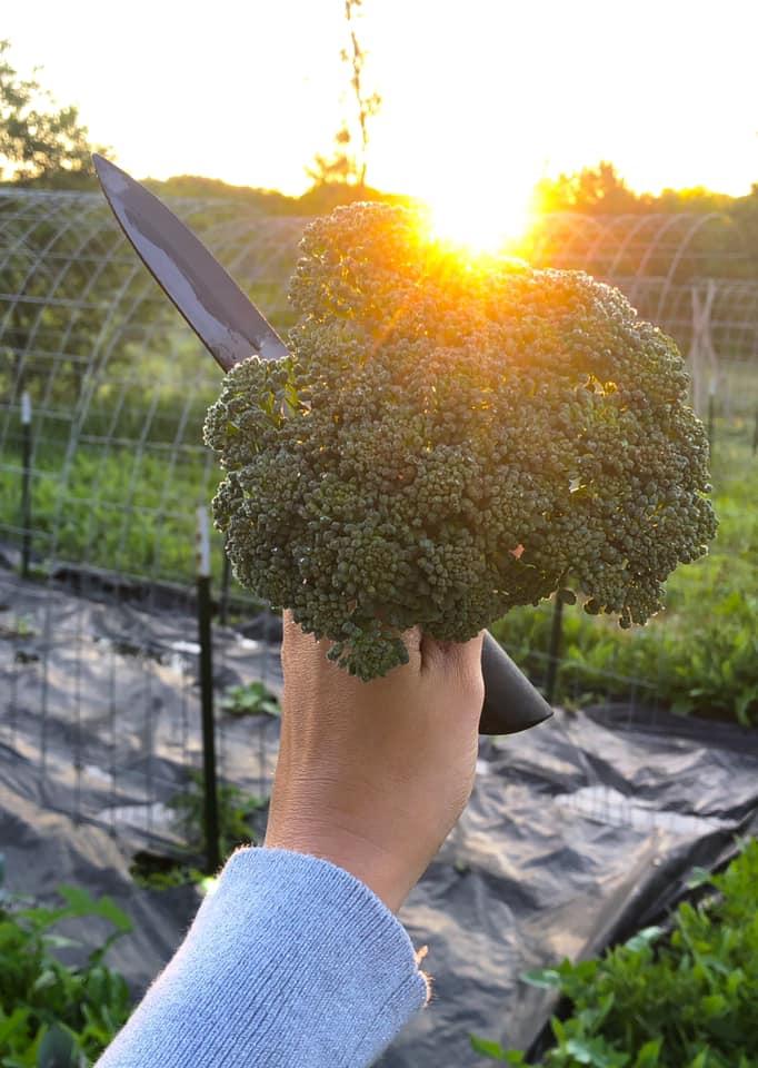 Raiquee's 2019 garden thread!-holybroccoli.jpg