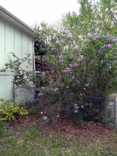 My 2019 Gardening Thread-img_20190422_133208012.jpg