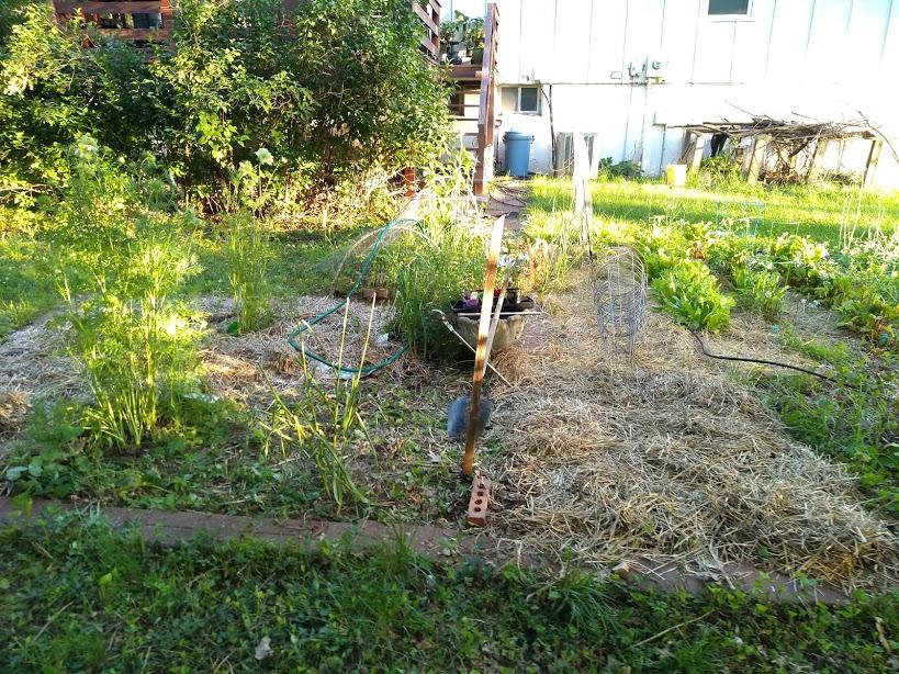 2020 Gardening Thread-img_20200611_195206335.jpg