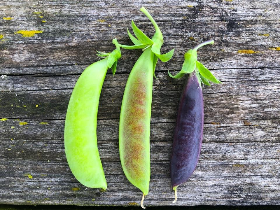 Raiquee's 2019 garden thread!-peas.jpg