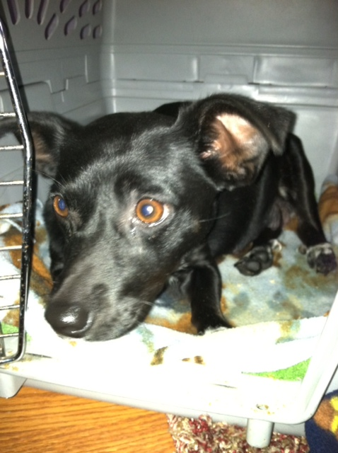 Need a good name (or two or three or four) for foster dog-photo1.jpg