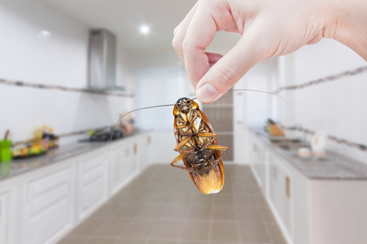 Stop Bugs From Coming Inside Before It Gets Too Costly