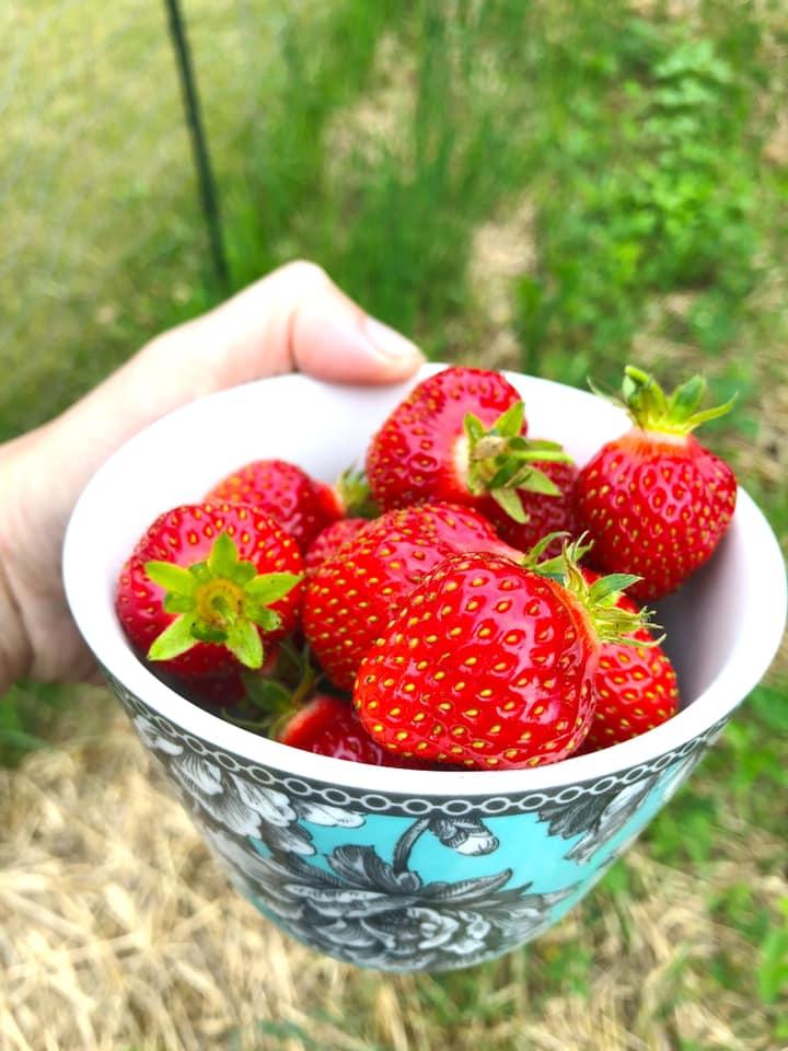 Raiquee's 2019 garden thread!-strawberries.jpg