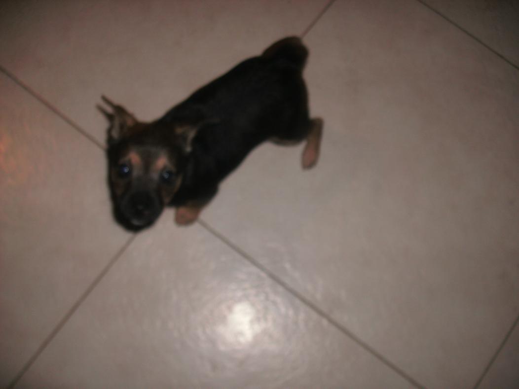 My newest family member-tiny-girl.jpg